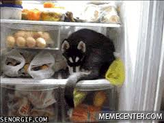 Cool Dog Meme - fridge dog stays cool by istike11 meme center