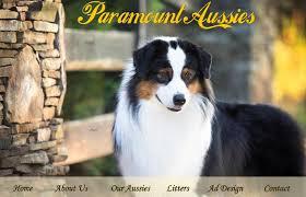 triple r australian shepherds quality australian shepherds for companions or show
