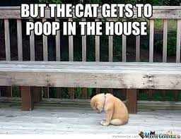 Puppy Memes - poor puppy memes best collection of funny poor puppy pictures