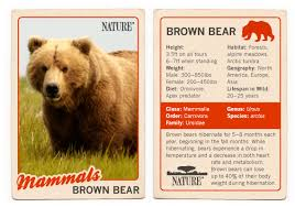 Are Bears Color Blind Bears Of The Last Frontier Brown Bear Fact Sheet Nature Pbs