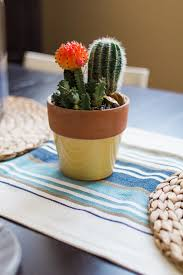 cactus home decor the best ways to add natural elements to your home décor