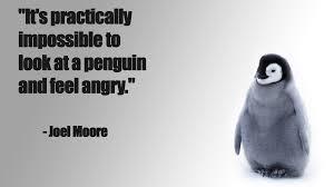 Cute Penguin Meme - cute penguin pictures with quotes
