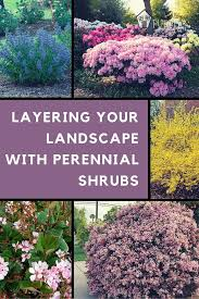 Shrub Garden Ideas Perennial Shrubs Add A Pop To Your Landscape Garden Plan Http