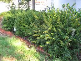 plants native to florida uf ifas extension polk gardening native shrubs for central florida