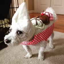 the most popular dog costumes popsugar pets 83 of the best dog halloween costumes for your pooch brit co