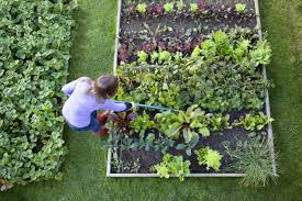 Backyard Vegetable Garden Ideas How To Plant Vegetables At Home Pertaining Vegetable Garden Idea