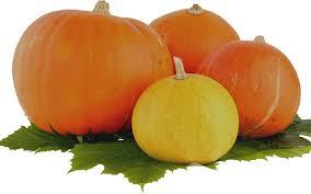 free photo pumpkin thanksgiving vegetable free image on