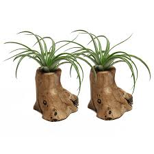 Plants For Desk Shop House Plants At Lowes Com