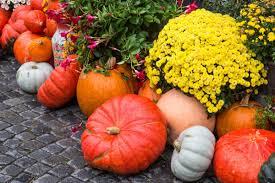 free images wood farm wagon cart flower food produce