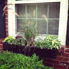 using a perennial ornamental grass in center of my window box