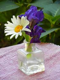 Vase With Irises Reblooming Iris Just Can U0027t Get Enough Ooo For The Love Of Iris