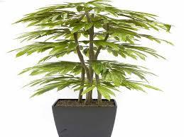 low light house plants house plants low light low light houseplants plants that don t