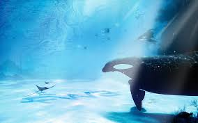 animals wallpapers sea freeandroid sealife ocean display