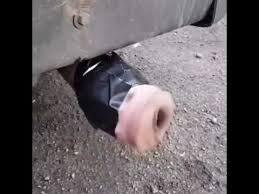 Fleshlight Meme - fleshlight in car exhaust wtf youtube