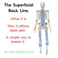 the superficial back line sbl and back a simple