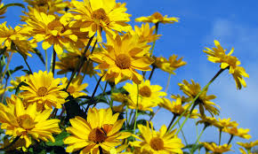 100 best 25 flowers for garden garden trellis ideas