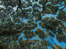 r arer canap forest canopy in zealand from r fractal trippy
