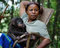 siege social bonobo founded by claudine andre in 1994 lola ya bonobo is the s