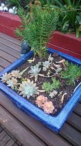 Summer Gardening - summer gardening start a succulents nursery nature play wa
