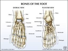 Top Foot Anatomy The Doctor Is In Senquez Golson U0027s Season Tripped Up By Lisfranc