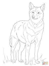 italian wolf coloring page free printable coloring pages