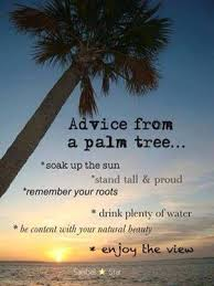 best 25 palm tree quotes ideas on tropical
