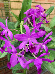 orchid pictures orchid hashtag on
