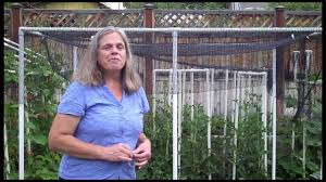 Make A Vegetable Garden by Quick Shade Canopy For The Vegetable Garden Youtube