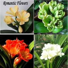 List Of Tropical Plants Names - 17 best images about flowers n the names on pinterest seasons the