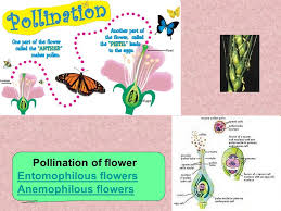 Part Of Flowers - lecture 6 author prof shanayda m i morphology of the