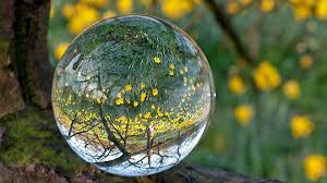 trees beautiful water tree forest bubble beauty landscape nature
