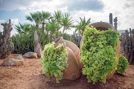 Desert Landscape Ideas by Desert Style Landscaping How To Desert Landscape Your Yard
