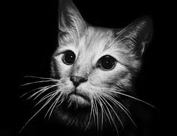cat charcoal black and white print by ashleymenard122 on