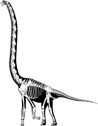skeletal reconstructions sauropod vertebra picture of the week