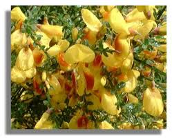 June Flowers - twelve months of scottish flowers june