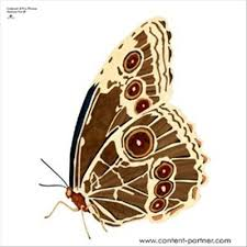 butterfly photo album 24 best butterfly album cover images on album