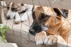 la culla montopoli montopoli sabina sindaco vieta detenzione cani in casa orrori
