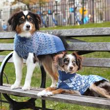 Home Design Story Dog Bone by The Best Dog Clothing Brands For Stylish Pet Clothes Instyle Com