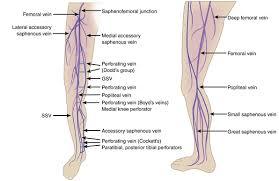 Foot Vascular Anatomy Varicose Veins Thoracic Key