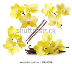 Orchid Flower Pic - orchid flower stock images royalty free images u0026 vectors