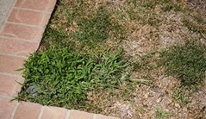 How To Cut Weeds In Backyard How To Get Rid Of Crabgrass Lawn Weeds Scotts