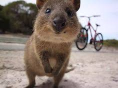High Koala Meme - frabz hi im frank frank the high koala 0a5343 jpg 500纓407 gags
