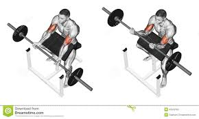 exercising curls on the bench stock illustration image 43932765