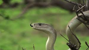 5 tips to attract snakes to your yard southern living
