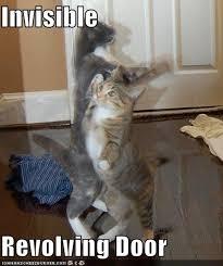 Invisible Cat Meme - best of invisible cat