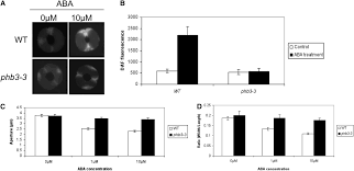 the arabidopsis prohibitin gene phb3 functions in nitric oxide
