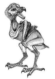dodo dancing skies art