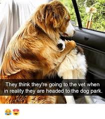 Dog Vet Meme - they think they re going to the vet when in reality they are