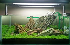 Aquascape Filter Planted Tank Breezed Carpeted Stones By Ramiz Ahmed Aquarium