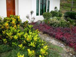 simple landscape design in the philippines tropical garden romblon